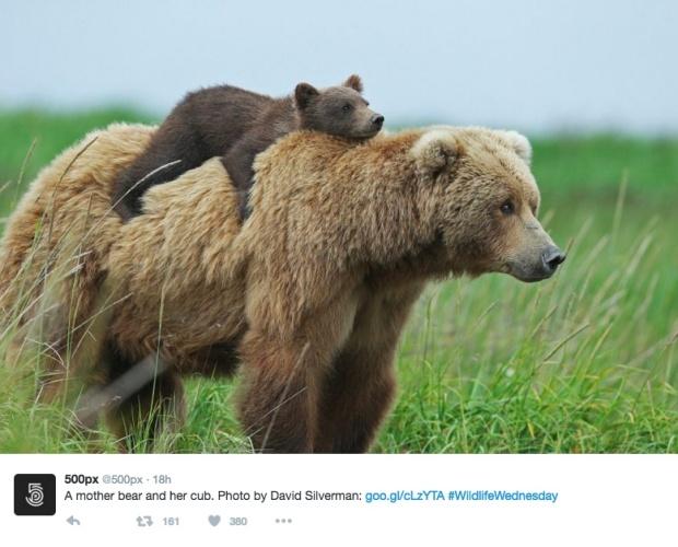 bear-copy