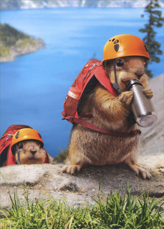 cd3541-squirell-climbers-birthday-card