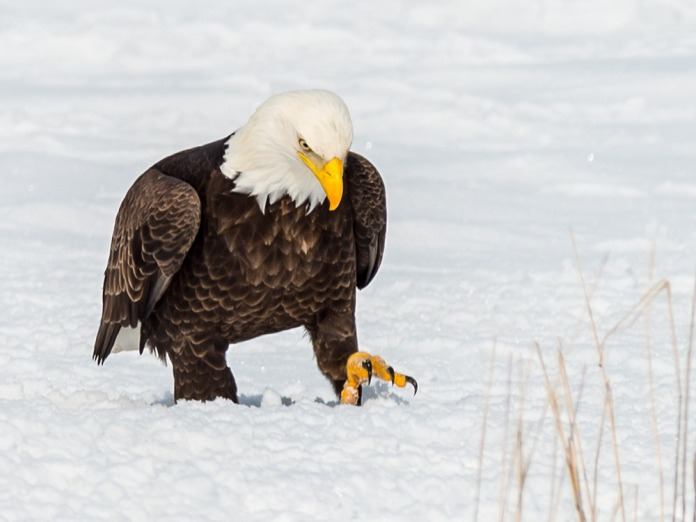 eagle7_zps8ed9759d